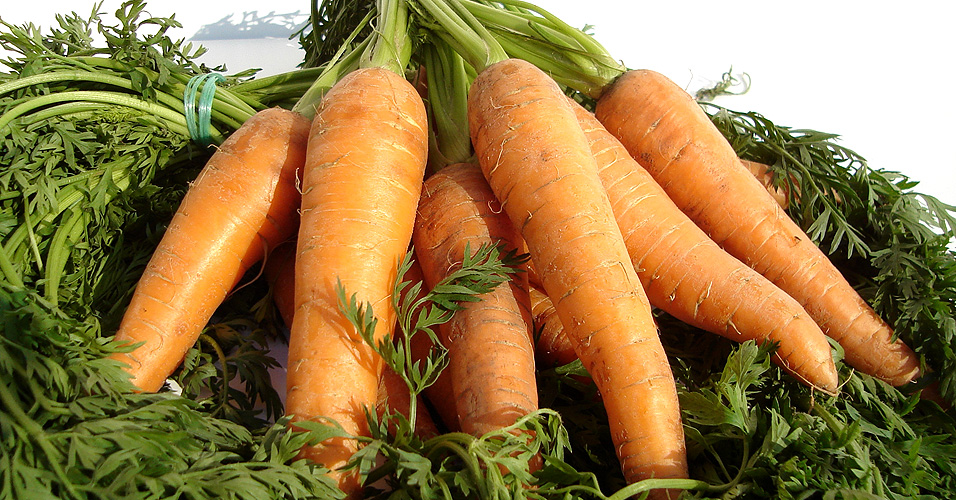 Cenoura sem ansiedade